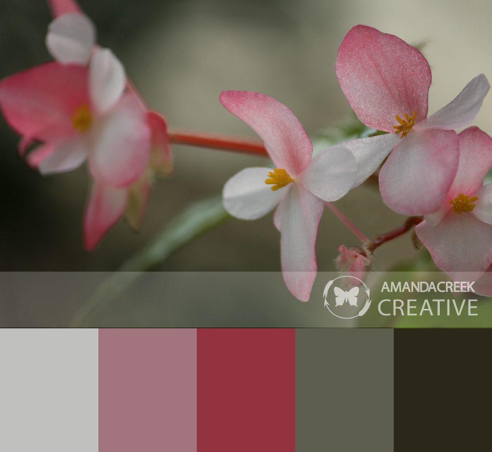 Color-Palette-1