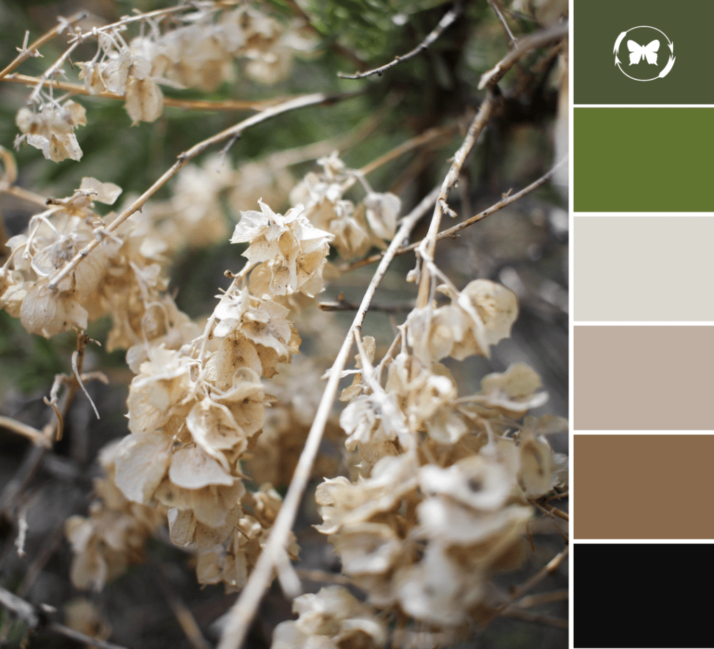 Nature Inspired Color Palette